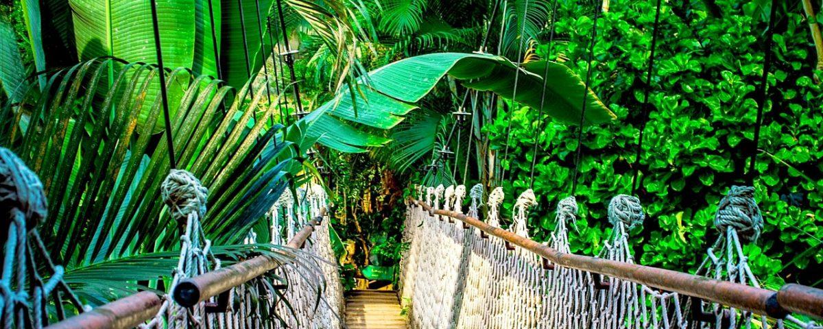 Cosa vedere in Amazzonia (3)-min