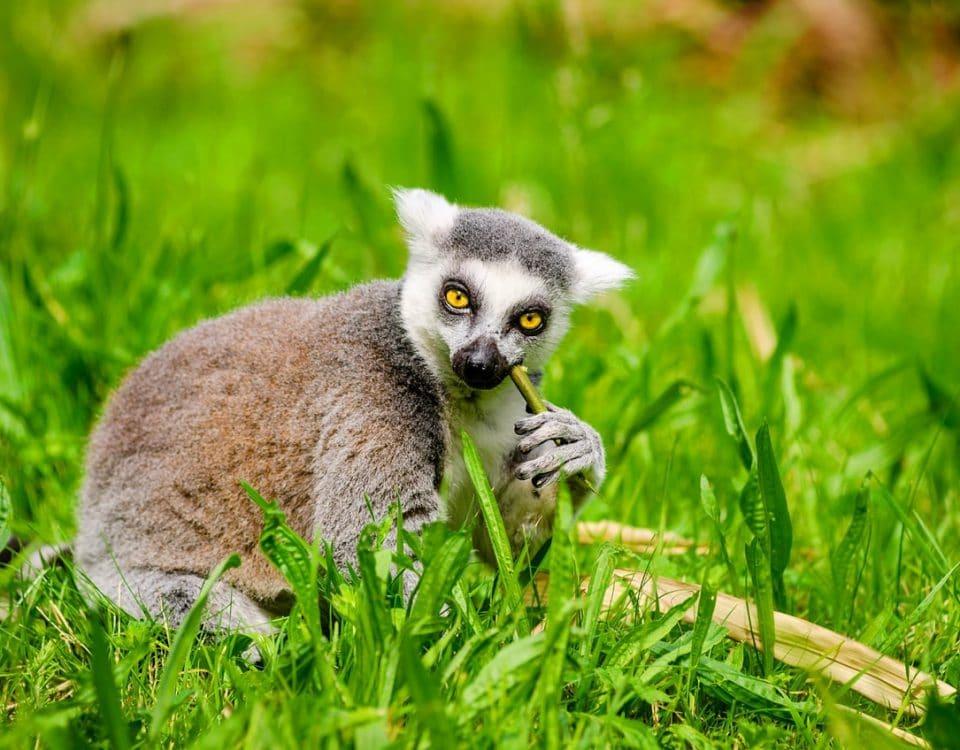 Il periodo migliore per andare in Madagascar (2)-min