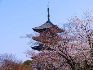 Kyoto quando andare