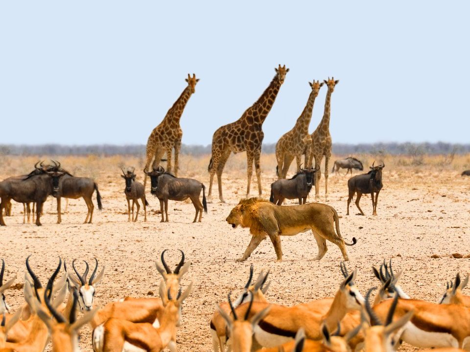 Namibia quando andare (1)