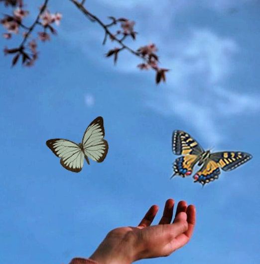 farfalle bruchi