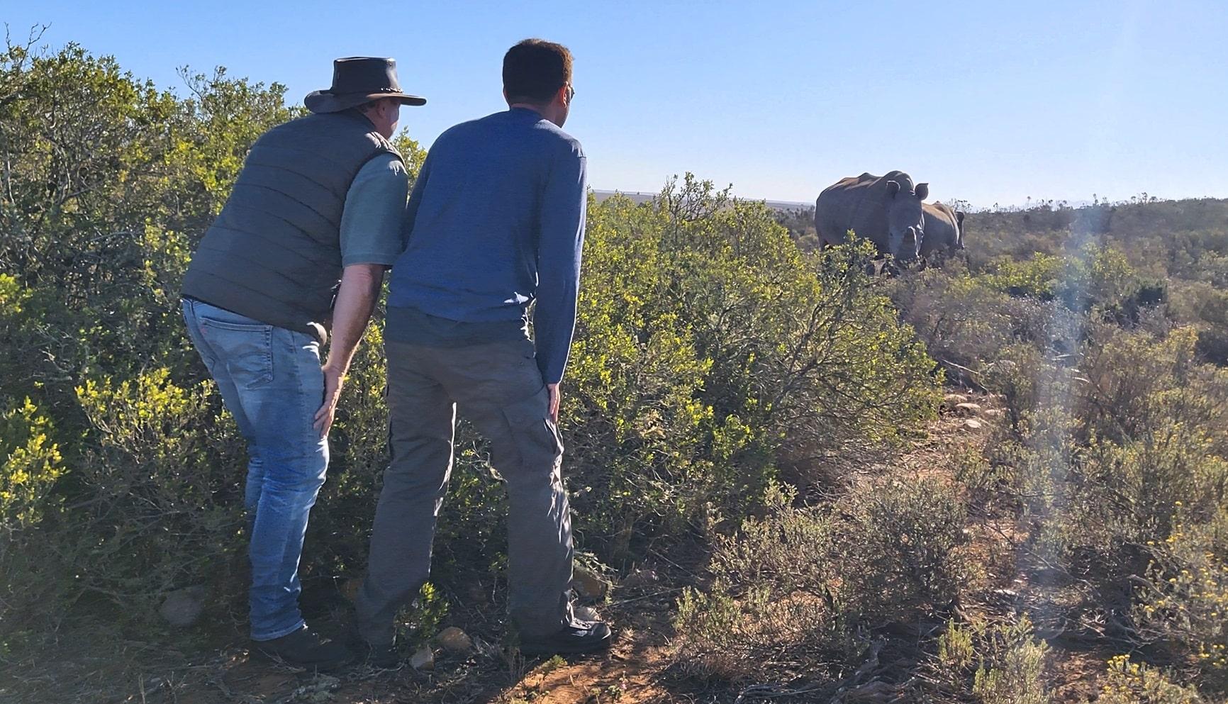 passeggiare con gli elefanti (1)