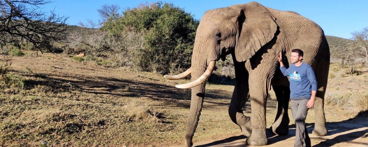 passeggiare con gli elefanti-min