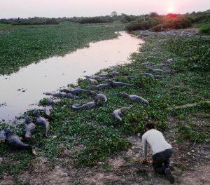 cosa vedere in amazzonia